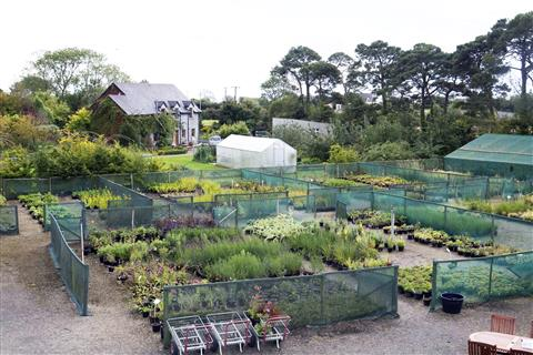 Kilmurry Nursery & Garden
