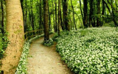 'Joggleting' through Tintern Trails