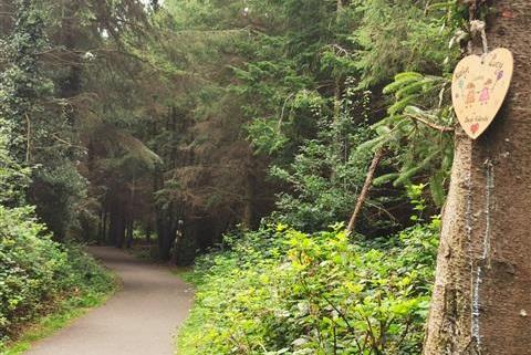 Gorey- Ramsfort Woods